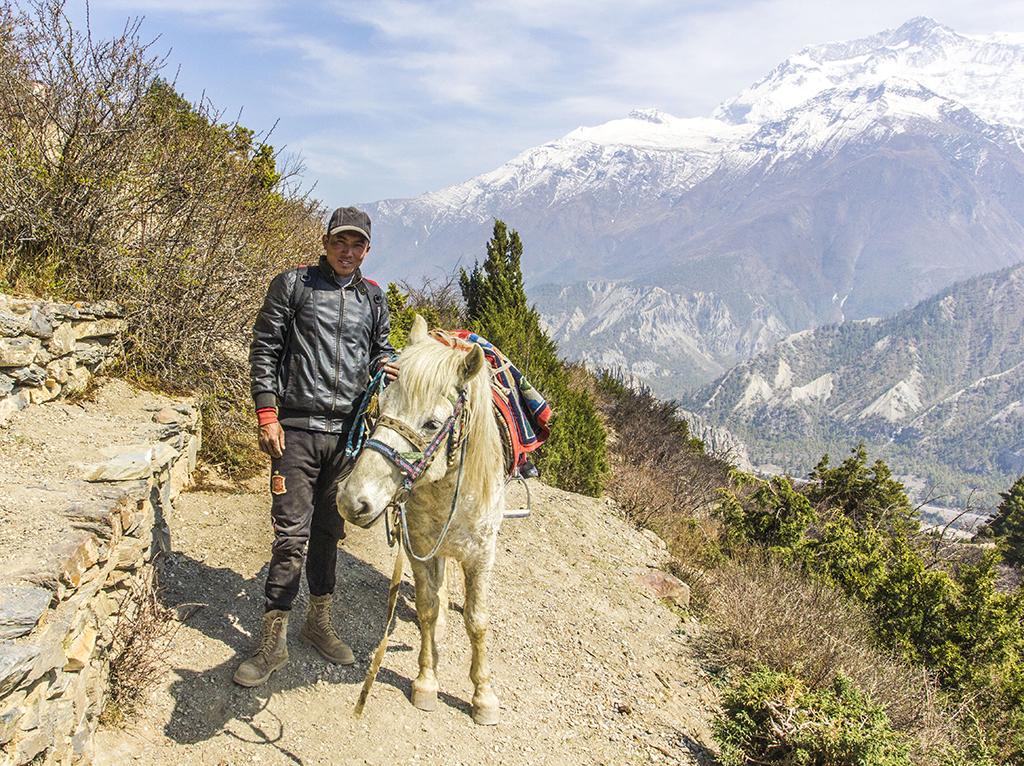 Хлопець тренує коня для роботи на перевалі Торунг (підйом на Льодове озеро, близько 4000 м)