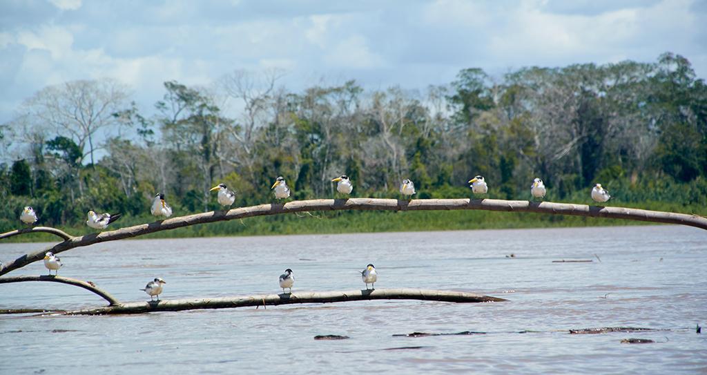 Ukayali river, Peru