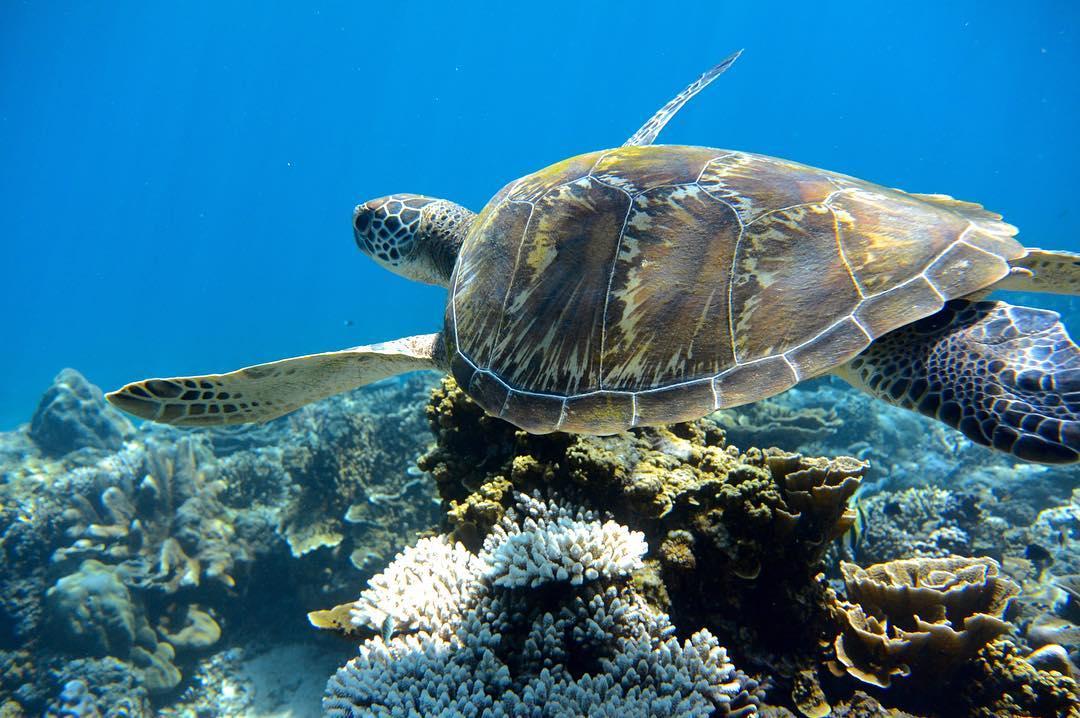 turtle-gili-air