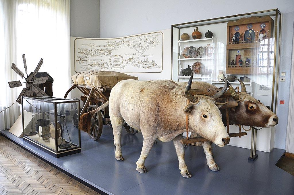 Воли у музеї ім. В. Кричевського в Полтаві
