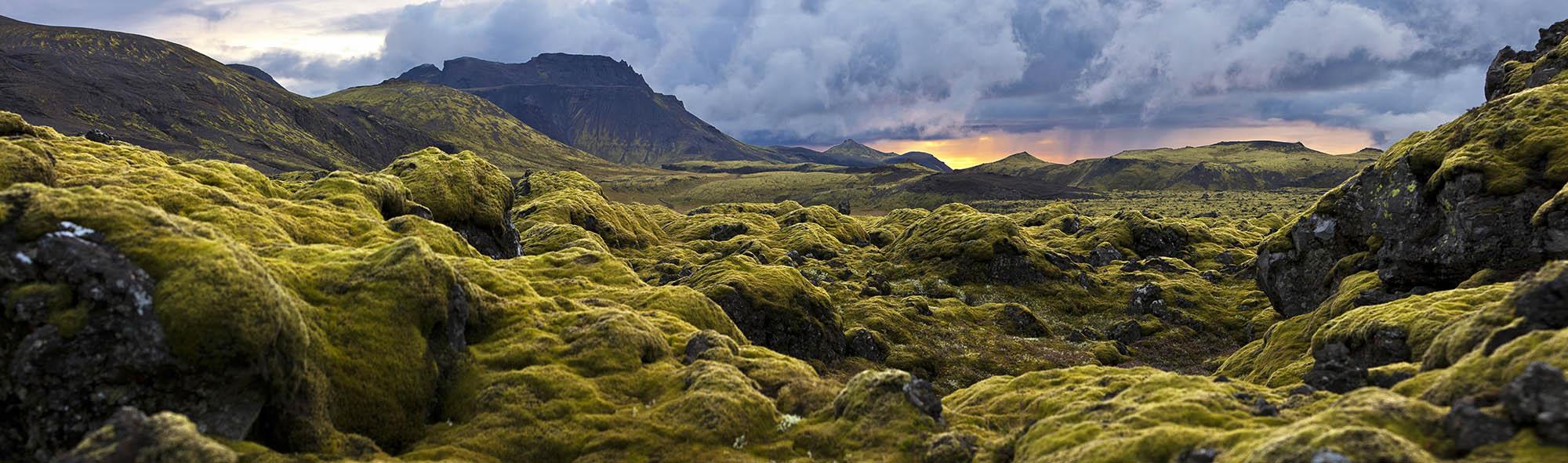 Там, де здавалося, не може рости нічого, ростуть мохи. Різних форм і кольорів, вони якось примудряються виживати навіть на лавових полях. Навесні, коли мохи цвітуть і оживають, в Ісландії заборонено сходити з доріжок, щоб не пошкодити мох