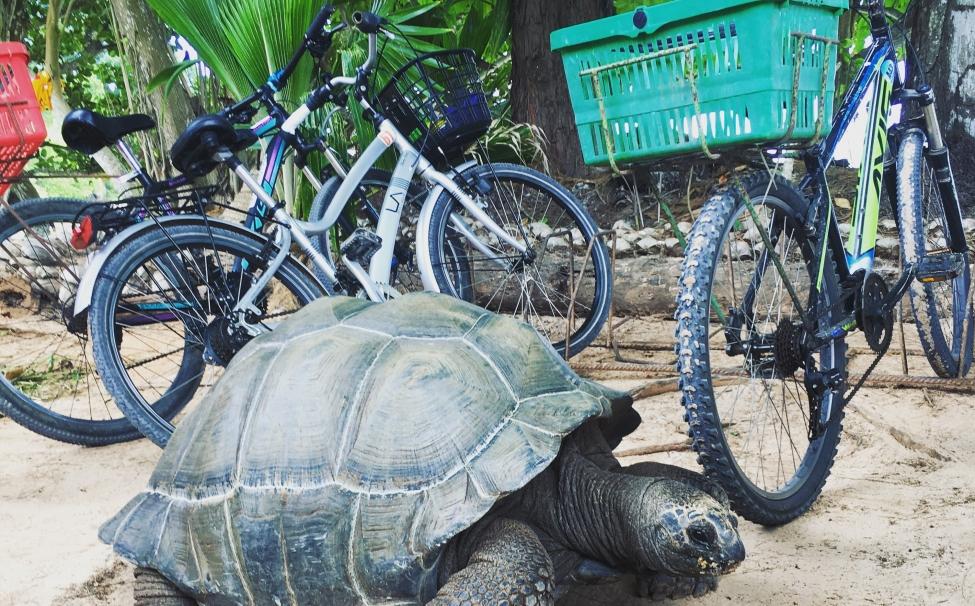 Сейшельська черепаха